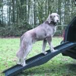 Hondenloopplank plooibaar ABS - 152 x 40 cm