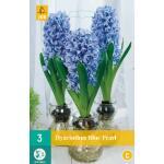 Hyacint Blue Pearl - kamercultuur (3 stuks)
