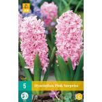 Hyacint Pink Surprise - hyacint roze
