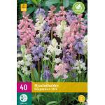 Hyacinthoides hispanica - boshyacint mix