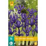 Iris Harmony - dwergiris