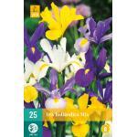Iris hollandica - mix
