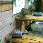 Landschildpad - levensecht