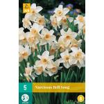 Narcissus Bell Song (5 stuks)