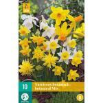Narcissus Botanisch mix
