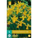 Narcissus February Gold - botanische narcis