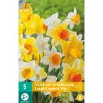 Narcissus grootkronig mix