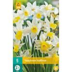 Narcissus Sailboat - botanische narcis