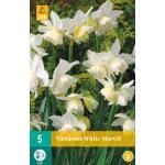 Narcissus White Marvel - botanische narcis (5 stuks)