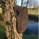 Nestbuidel Brushwood - 27 cm