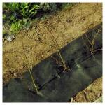 Hagenvlies - onkruidbeschermvlies 25 x 0,5 m