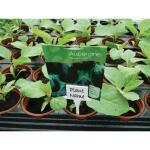 Plaatetiketten met gleuf als naambordjes voor planten (10 stuks)