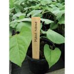 Plantenlabels hout - 10 cm (10 stuks)