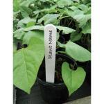 Plantenlabels wit kunststof - 20 cm (20 stuks)