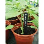 Plantenlabels zwart kunststof - 20 cm (20 stuks)