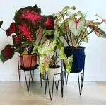 Plantenstandaard Blom zwart - 29,5 x 29,5 x 50 cm