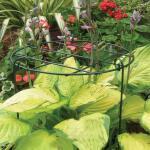 Plantensteun groeiraster 41 x 61 cm