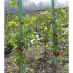 Plantensteun voor tomaten met waterreserve 1,8 m