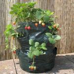 Beplantingszakken voor terras of balkon