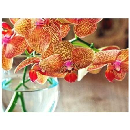 Potgrond orchidee 6 L