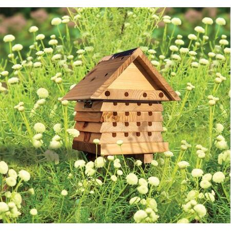 Solitaire bijen kast