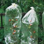 Tomatenhoezen 10 x 0,65 m