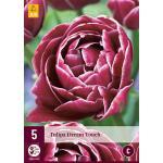 Tulipa Dream Touch - Tulp dubbellaat