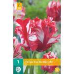 Tulipa Estella Rijnveld - parkiet tulp