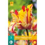 Tulipa Flaming Parrot - parkiet tulp