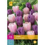 Tulipa Macaron mix - Triumph tulp