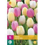 Tulipa Sorbet Mix - enkele late tulp (15 stuks)