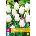 Tulipa Triumph - wit