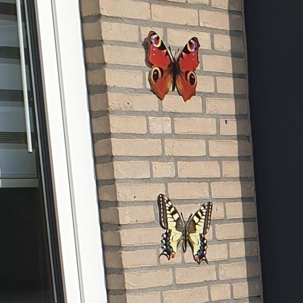 Muurdecoratie Vlinders Levensechte Vlinders Aan De Muur Wanddecoratie Met Dieren Wanddecoratie Decoratie En Sfeer Tuinadvies