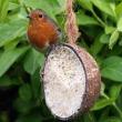 Kokosnoot vogelvoer