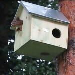 Woonhuisje voor eekhoorns - naturel hout