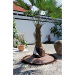 Wortelbescherming palmboom tegen vorst